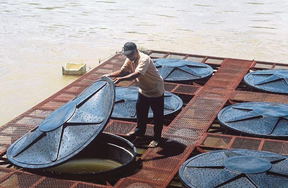 BAHARUDDIN  sentiasa  memeriksa setiap tangki PVC yang menempatkan ikan patin ternakannya ketika ditemui di Kampung Pulau Tawar.