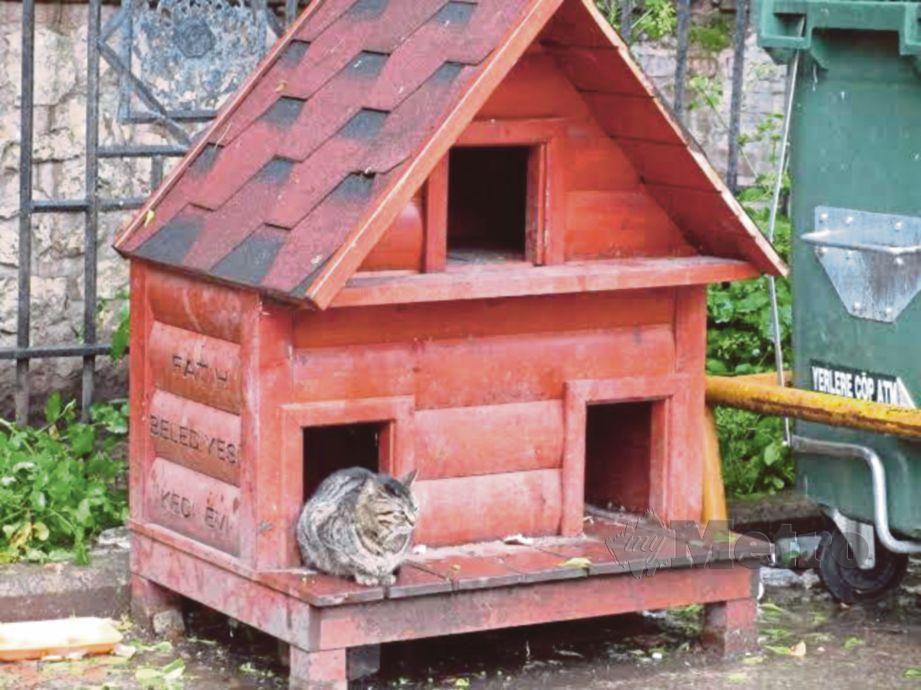RAKYAT Turki sangat menyayangi kucing sehingga membina tempat perlindungan di mana sahaja.