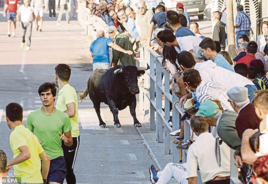 SEEKOR lembu jantan mengejar peserta larian dalam festival di tengah Sepanyol. FOTO EPA