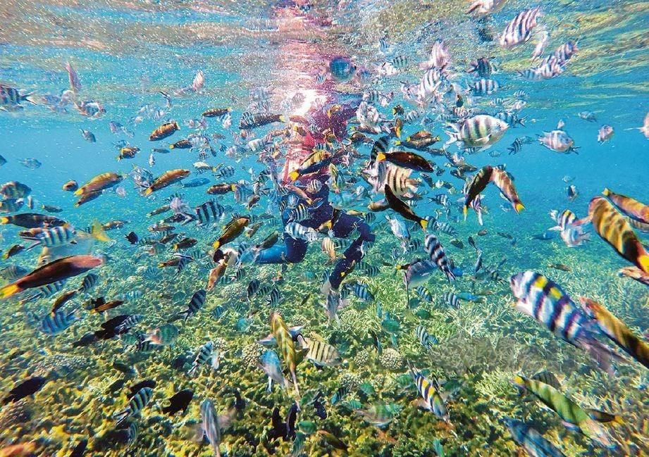SEORANG penyelam dikerumuni pelbagai spesies ikan di kawasan terumbu karang Pulau Redang.