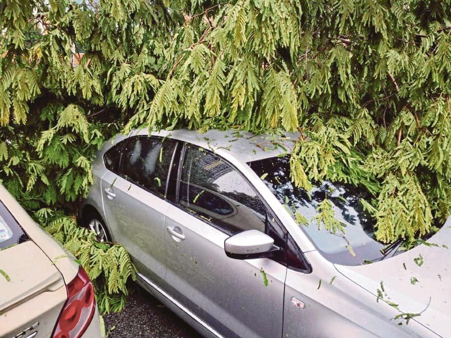 KENDERAAN yang rosak akibat dihempap pokok tumbang