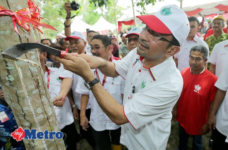 RISDA dedah ketum beri pulangan RM1000 satu hektar berbanding kepala sawit cuma RM150