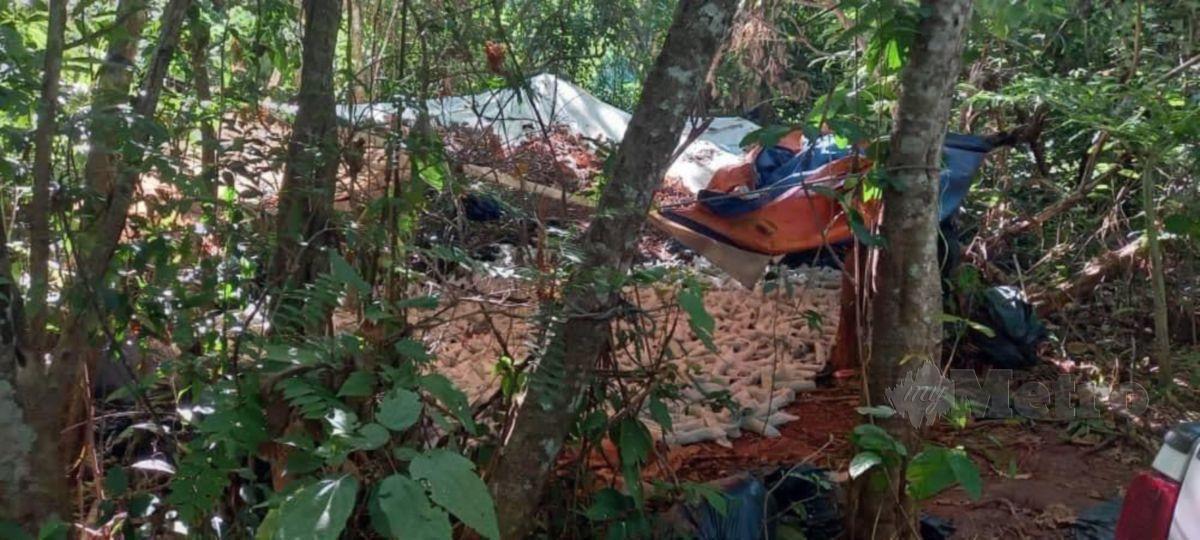 Polis merampas 1.4 tan daun ketum bernilai RM42,000 yang cuba diseludup ke Thailand selepas membongkar 'port' transit pembungkusan barang terlarang berkenaan di sebuah hutan belukar di Kampung Bukit Chabang, Padang Besar. FOTO IHSAN IPD PADANG BESAR