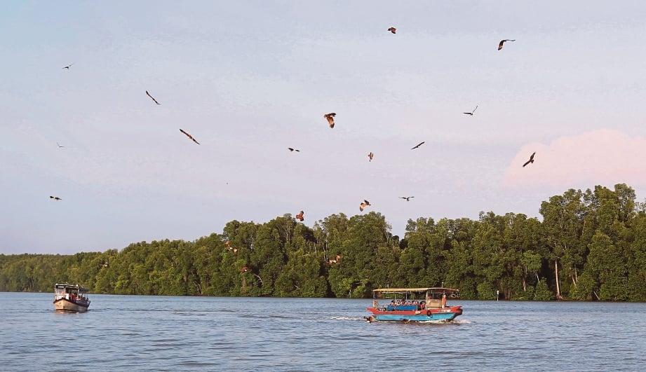 HELANG yang berterbangan di udara mencuri perhatian penumpang bot pelancong di Kuala Sepetang. FOTO Effendy Rashid