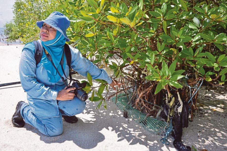 PEGAWAI Penyelidik Kanan, Ketua Projek Penanaman Bakar (R&D) FRIM, Dr Raja Barizan Raja Sulaiman menunjukkan pokok akar tunjang di Hutan Simpan Kuala Bernam, Kampung Sungai Haji Dorani, Sungai Besar.