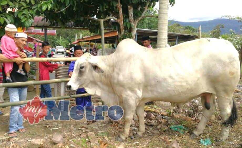 ORANG ramai melihat lembu jenis brahman bernilai RM14,000 antara tujuh ekor haiwan ternakan yang akan dikorbankan sempena sambutan Hari Raya Aidiladha di Masjid Al- Falah Kampung Betong. FOTO Mohd Sharumnisham Shahbudin