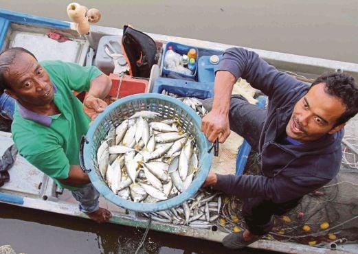 NELAYAN  menunjukkan ikan yang baru ditangkap di jeti nelayan Kuala Kedah.