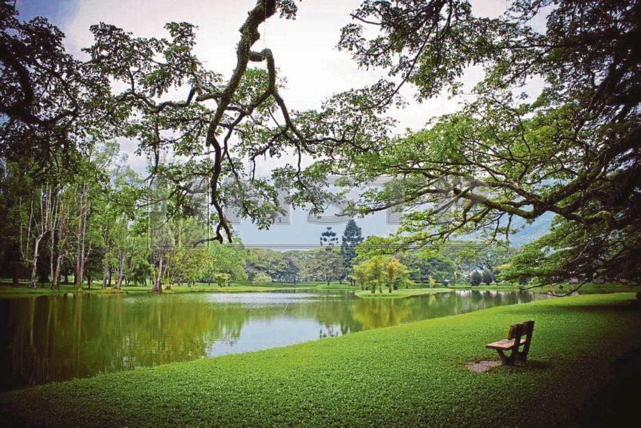SUASANA damai dapat dirasakan di Taman Tasik Taiping.