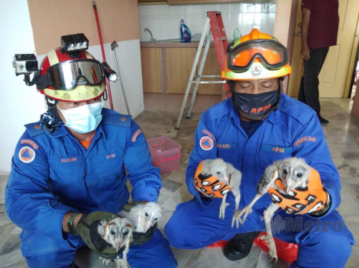 Angkatan Pertahanan Awam Malaysia (APM) Kuala Selangor menangkap empat ekor anak burung hantu yang bersarang di atas siling sebuah rumah di Jalan Astana 13/3, Bandar Puncak Alam, hari ini. FOTO IHSAN APM KUALA SELANGOR
