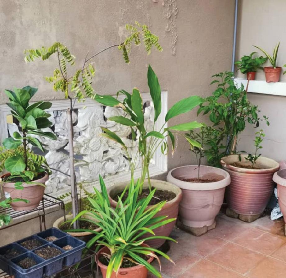 ANN gembira pokok ditanam hidup subur.