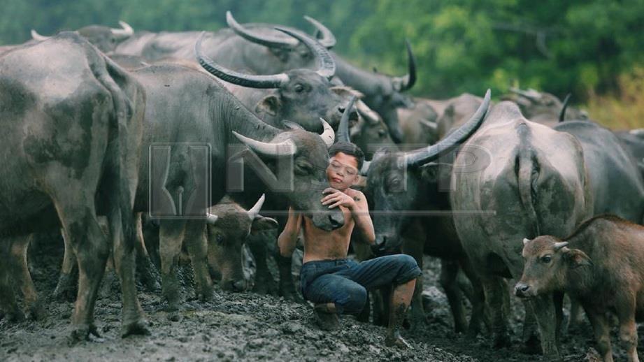 MUHAMMAD Syukur bersama kerbaunya di Kampung Kubang Bujuk. Syukur menjadi perhatian dunia selepas gambar keakrabannya dengan kerbau yang dirakam seorang jurugambar tular di media sosial. FOTO Ghazali Kori