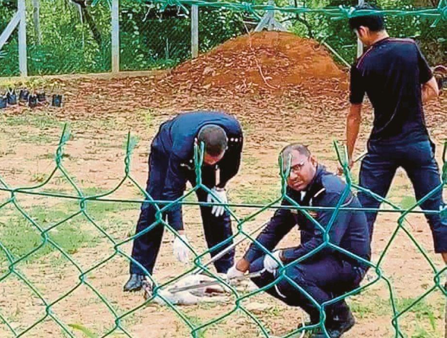 ANGGOTA penguat kuasa MDKP mengeluarkan anjing yang terperangkap di dalam longkang di Taman Bukit Pilah Perdana.