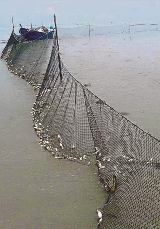ANTARA pukat yang dipasang nelayan.