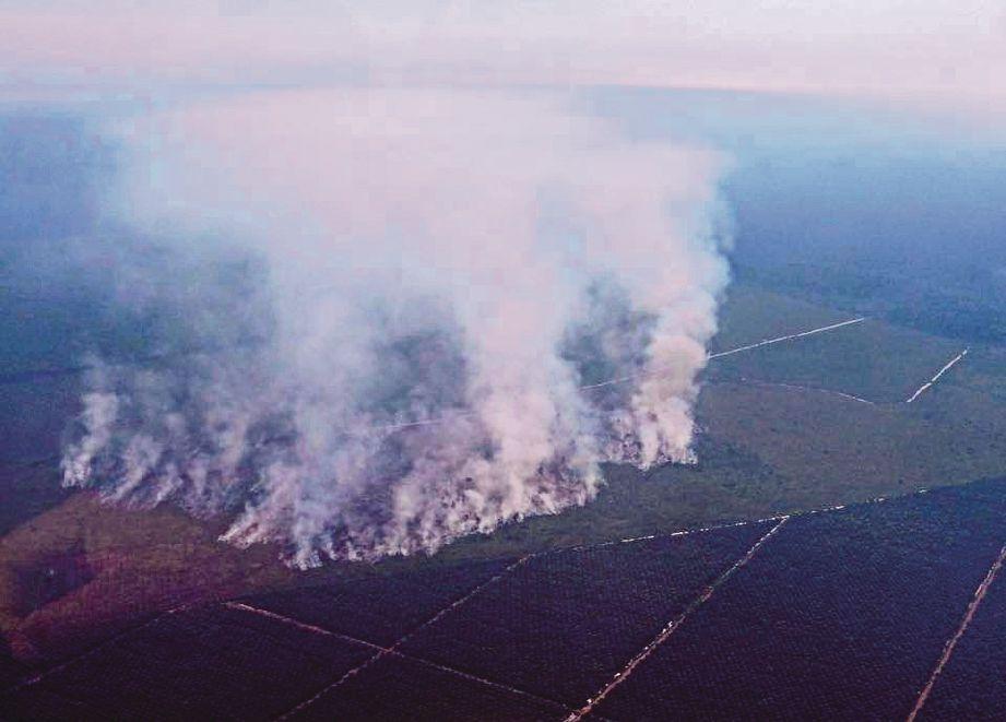 GAMBAR menunjukkan kebakaran hutan yang dikesan di Batu Panjang di daerah Rupat di Bengkalis, Riau. - Agensi