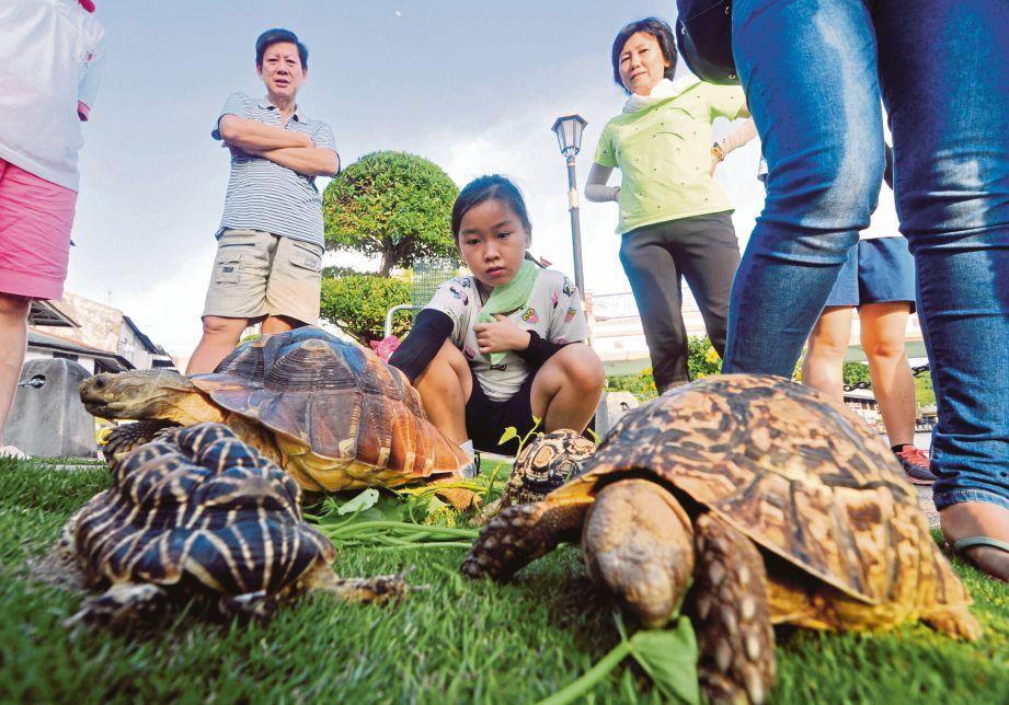 KHOO  memerhati kura-kura berasal dari Afrika dan India yang dibawa bersiar-siar.