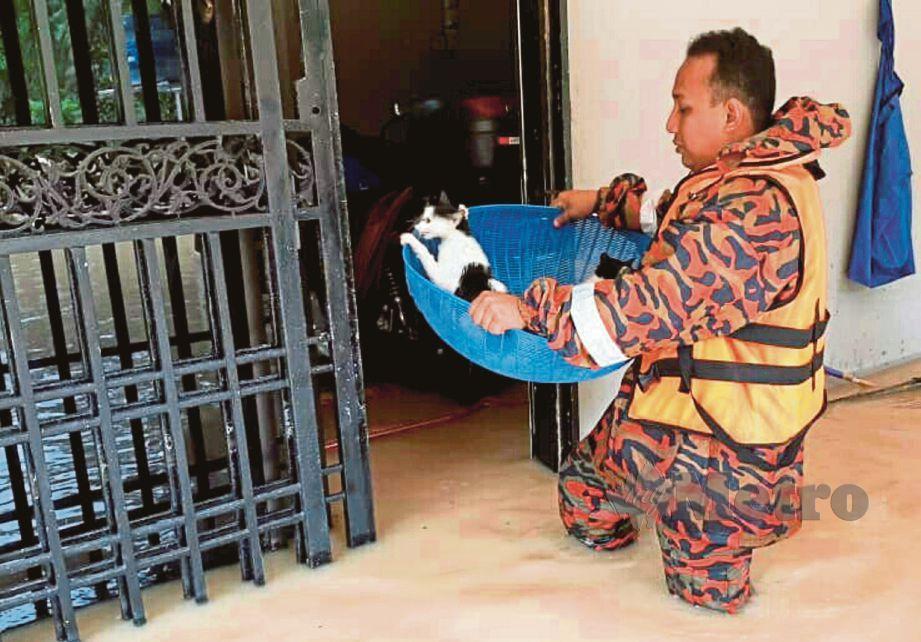 ANGGOTA bomba menyelamatkan kucing yang terperangkap ketika kejadian banjir di Kampung Sungai Rambai, Simpang Renggam.