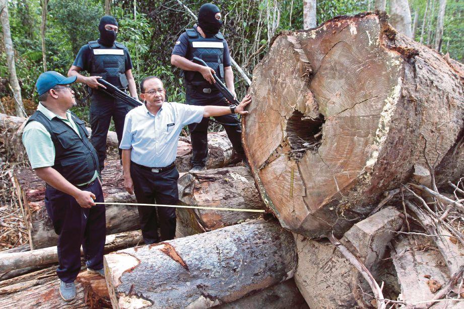 Rakus Gondol Hutan Harian Metro
