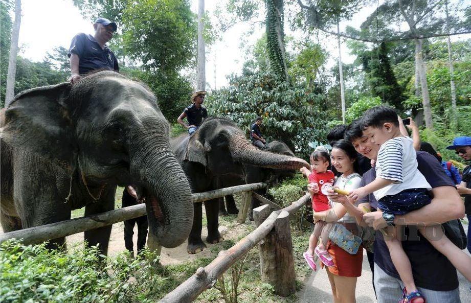 Urus Konflik Gajah Manusia Harian Metro