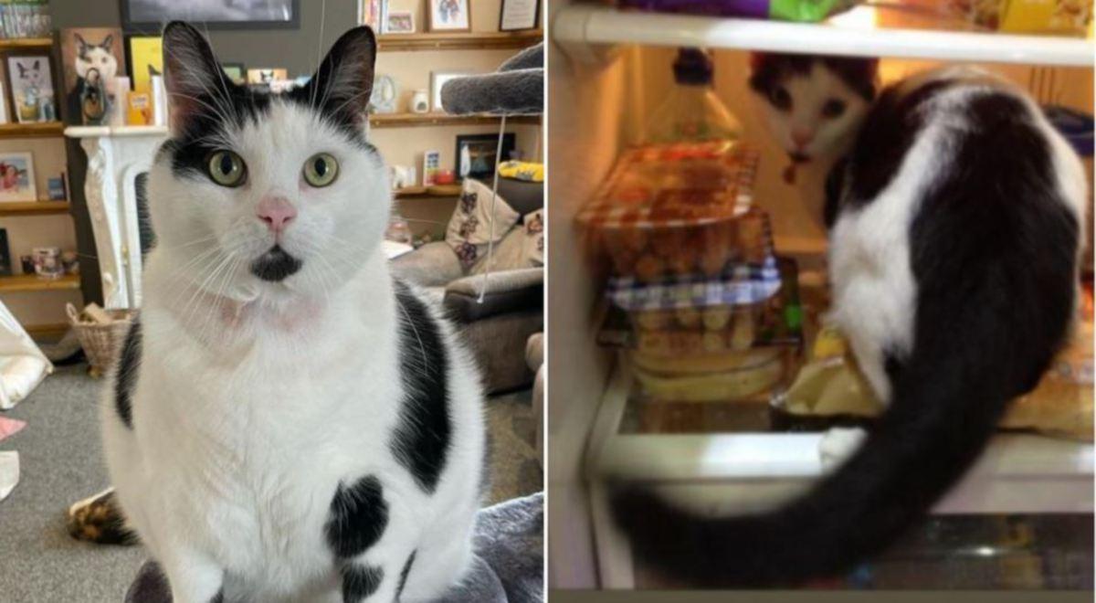 PEMILIK kucing terpaksa memasang kunci di peti sejuk dan almari  untuk menggelak Keith yang semakin obes curi makanan.