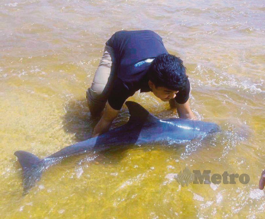 PENUNTUT UMT, Mohd Nur Aiman Suhami menyelamatkan ikan lumba-lumba yang terdampar di Pantai Tanjung Gelam, Kuala Nerus pada Jumaat lalu.