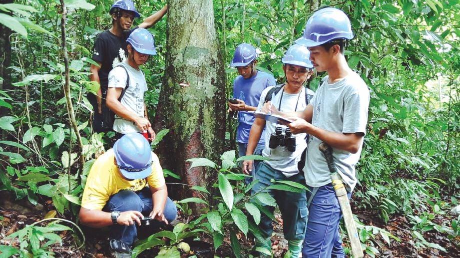 KERJA mengumpul data dan benih spesies pokok hutan yang terancam.