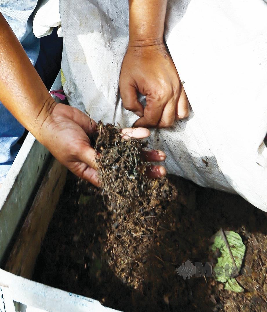 TANAH dirawat menggunakan komponen seperti tahi kambing, rumput kering dan mikroorganisma untuk tingkatkan kualiti. FOTO Fadhli Hamzah