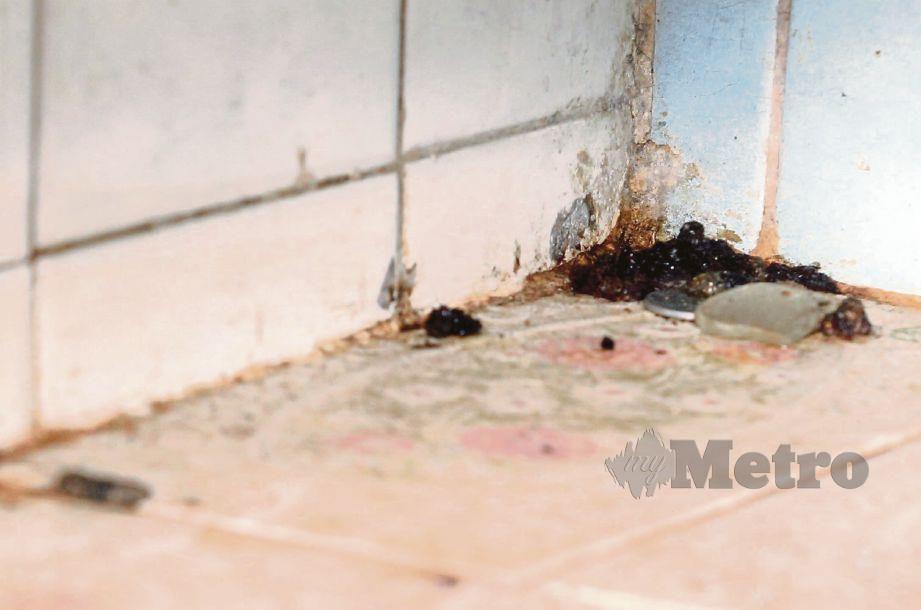 NAJIS tikus yang ditemui ketika pemeriksaan di sebuah restoran di Gat Lebuh Cecil, Georgetown. FOTO Danial Saad