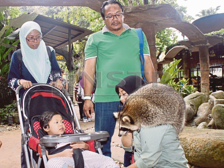 FIRASZ Nur Ryhan diberi peluang bermain dan melihat haiwan  di Petting Zoo, Lost World Of Tambun.