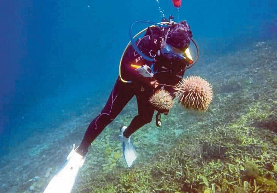 ANGGOTA APM mengadakan Program Pembersihan Dasar Laut di Pulau Redang. Gambar kecil, tapak sulaiman mahkota berduri yang ditangkap.