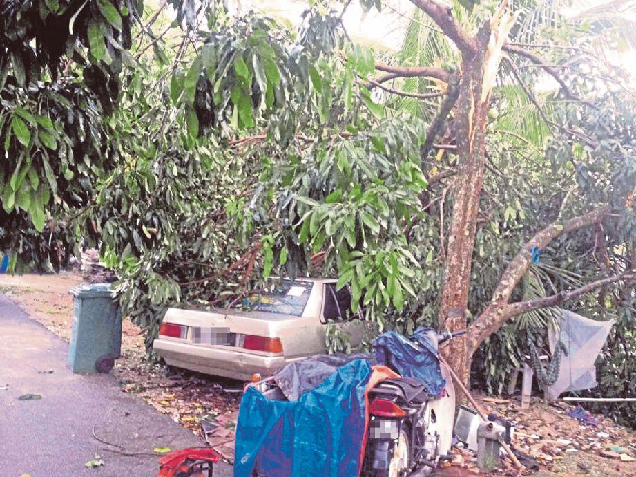 KENDERAAN penduduk rosak dihempap pokok tumbang.