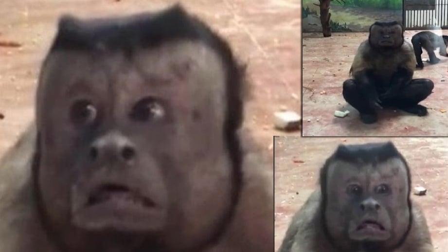 Wajah monyet menyerupai manusia di Taman Zoo Tianjin yang tular. FOTO NEWSFLARE