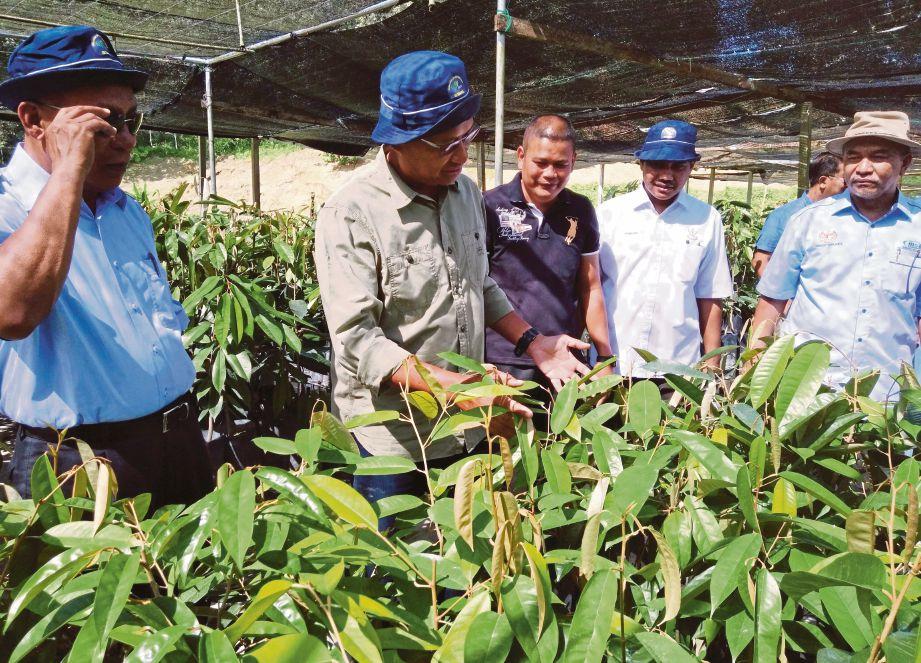 AHMAD Shabery  (dua dari  kiri) melihat anak pokok durian Musang King  di Kluster Durian Raub.