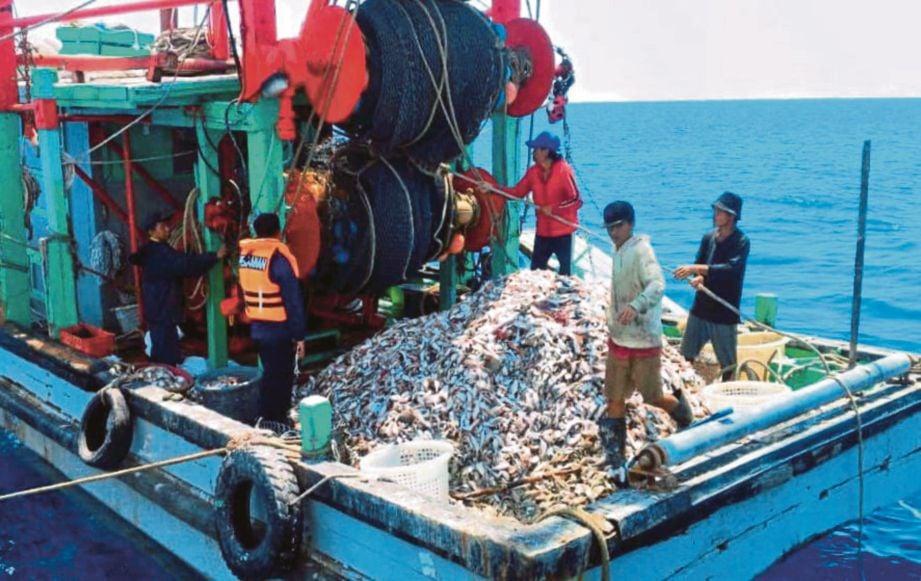 PENDARATAN ikan baja yang berlambak dari Zon B menjejaskan sumber ikan negara pada masa depan