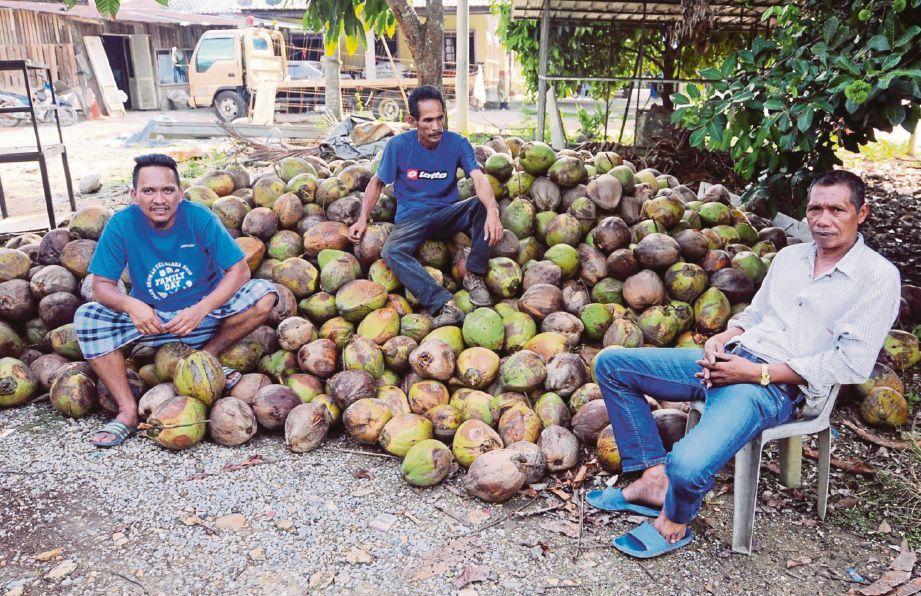 PEMBEKAL kelapa tua termenung di atas longgokan kelapa tua yang tidak terjual di Kampung Paya Rajin.