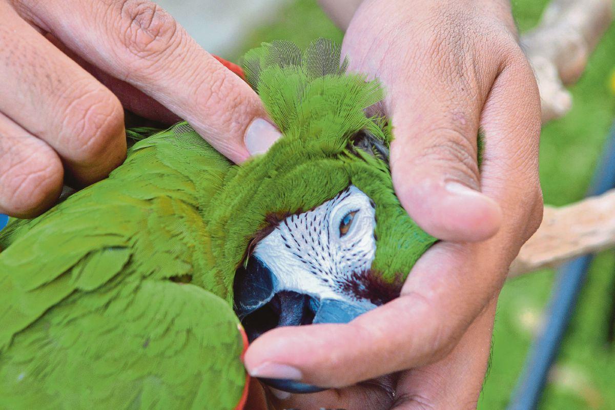 DEMO memeriksa bahagian burung yang kerap mengalami masalah kutu.
