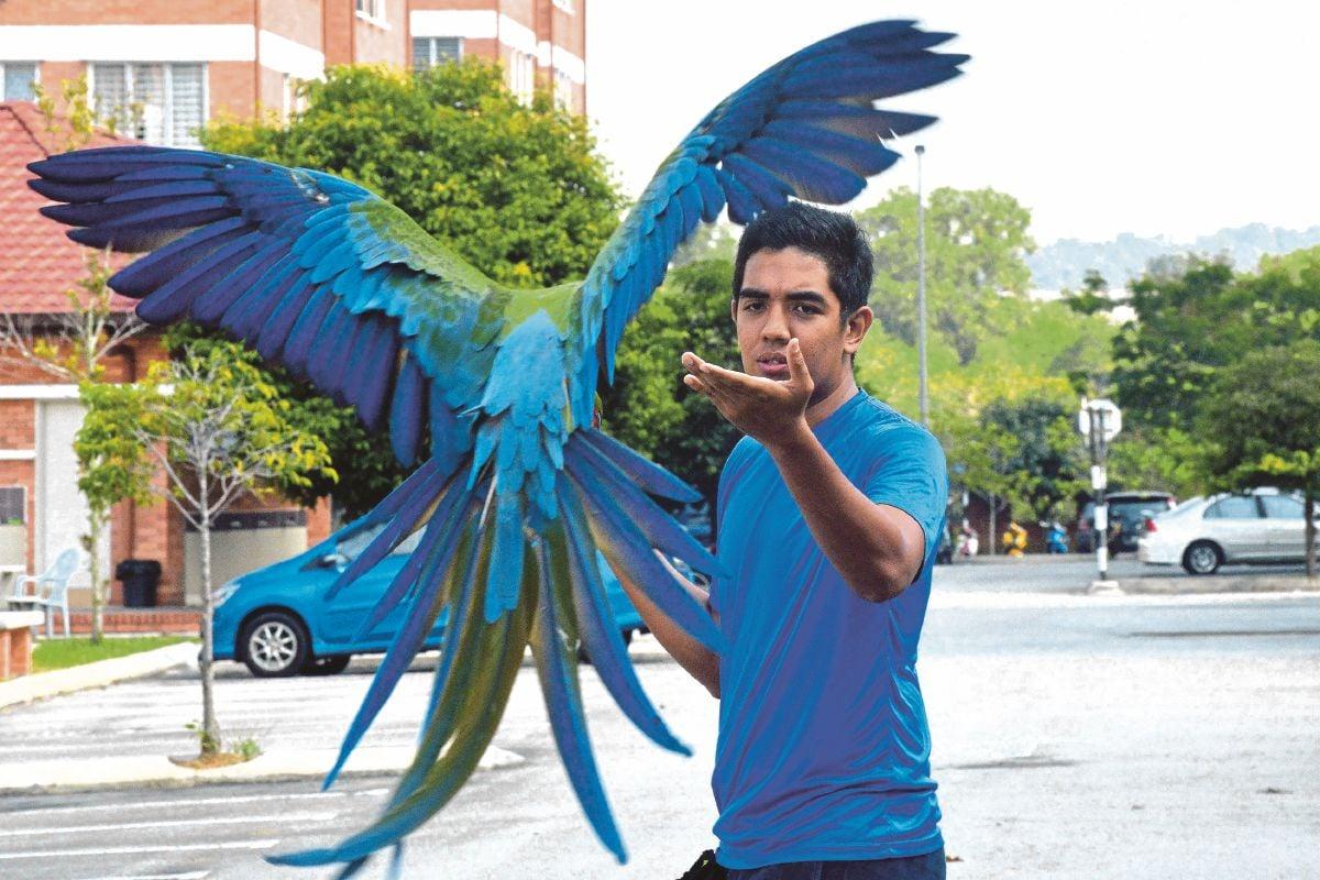 KAGUM melihat aksi Syimir Ahmad berjaya melatih burung yang mempunyai sejarah 'trauma' untuk mendarat.