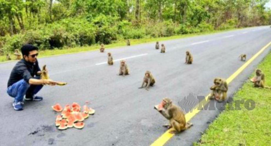 SEKUMPULAN monyet di India menjaga penjarakan sosial ketika makan tembikai. FOTO Twitter