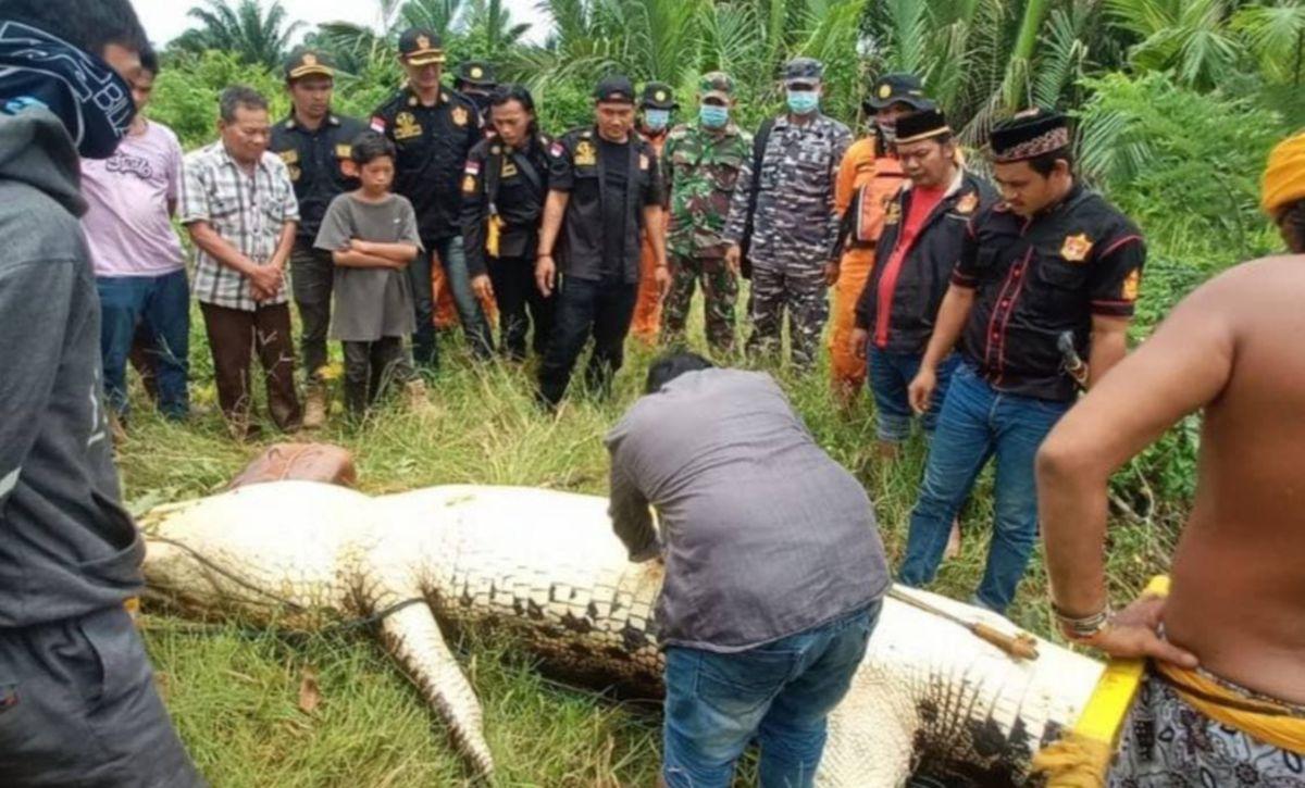 SAAT ketika pasukan SAR membelah perut buaya yang membaham kanak-kanak lelaki di Kalimantan. FOTO Agensi