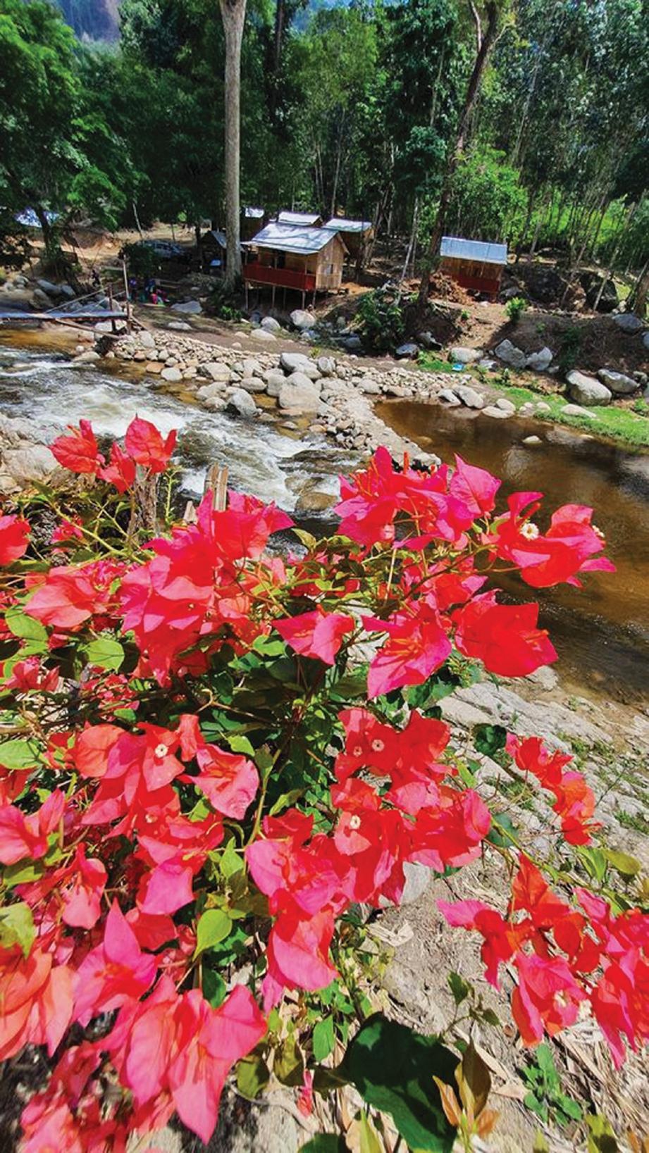 TERDAPAT tanaman bunga di sekitar inap desa terbabit.