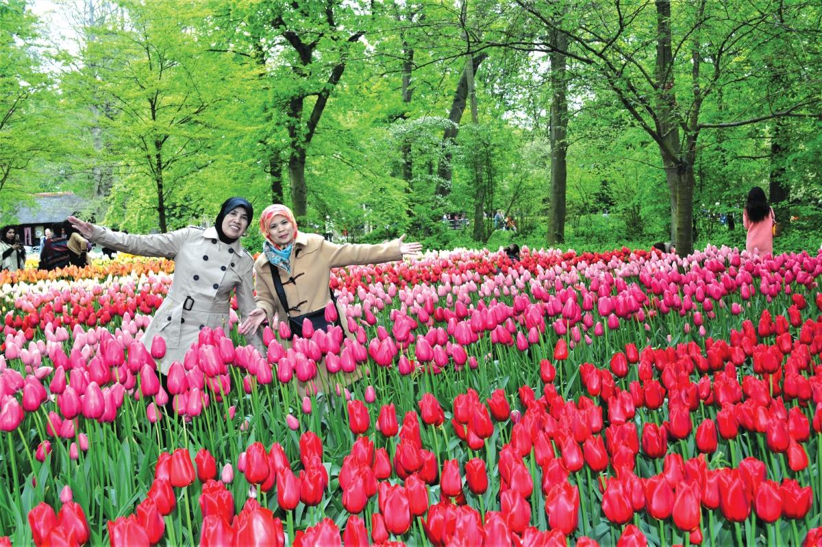 MENIKMATI keindahan bunga tulip di Taman Tulip Keukenhof.