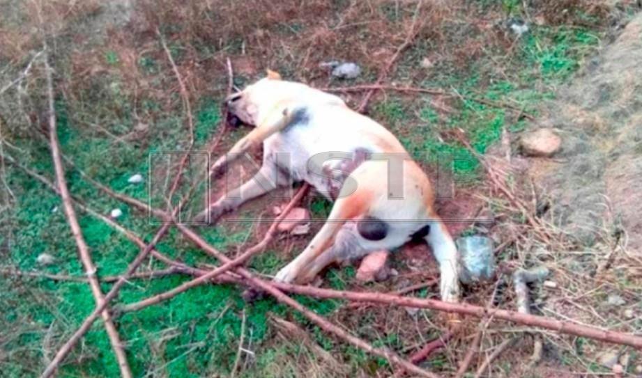 Antara anjing yang ditemui mati dipercayai diracun.