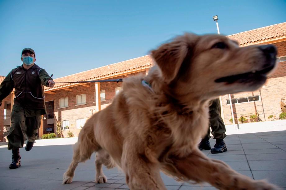POLIS melatih salah seekor anjing yang akan digunakan untuk mengesan Covid-19. FOTO AFP