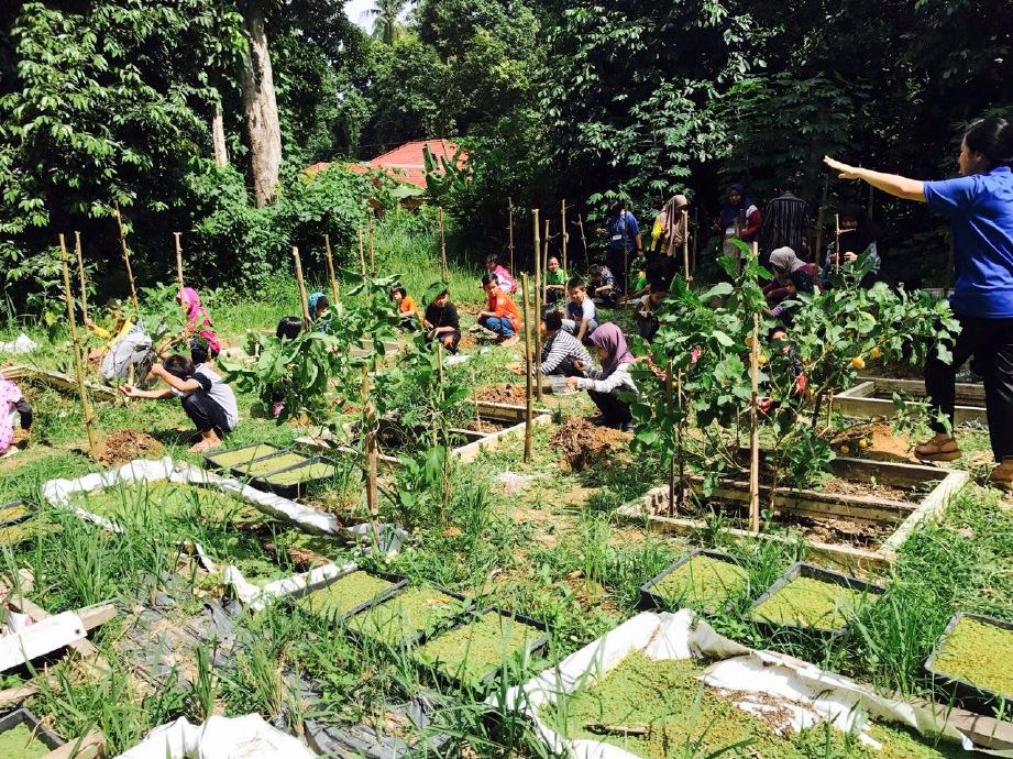 ANTARA kebun untuk memberi pendedahan kepada kanak-kanak mengenai tanaman.