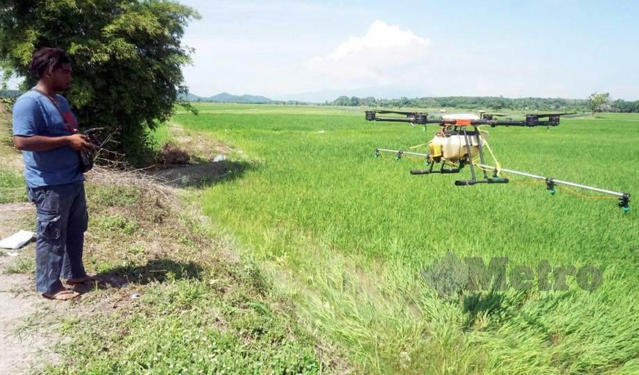 MOHD Saifullah mengendalikan dron bagi tujuan menyembur racun dan baja di sawah di Kampung Paya Kerchut, Pendang.FOTO Noorazura Abdul Rahman