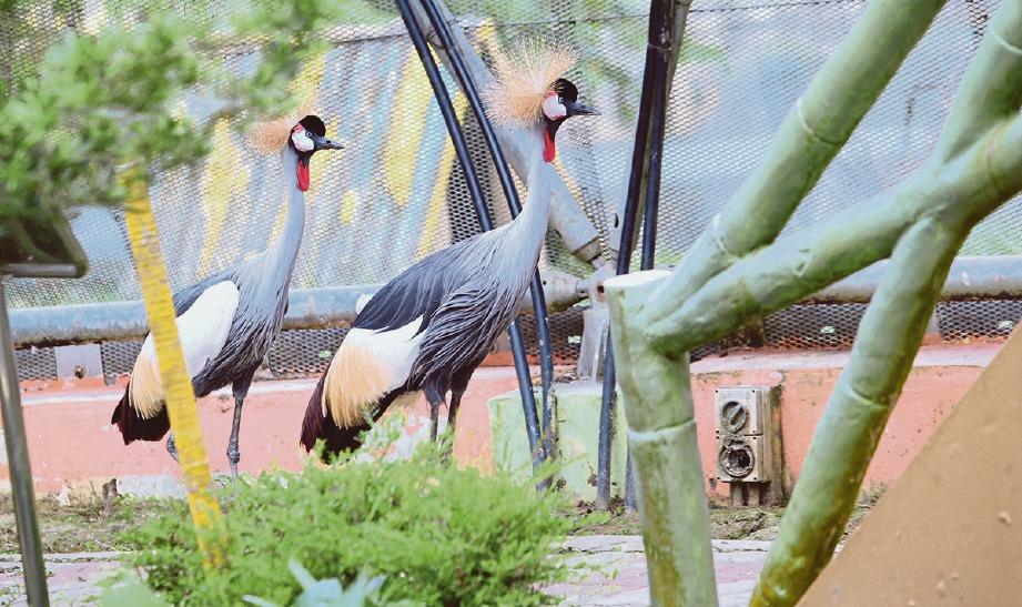 FESTIVAL berskala besar di Taman Burung Labuan langkah proaktif tarik pengunjung. FOTO Nurul Shafina Jemenon