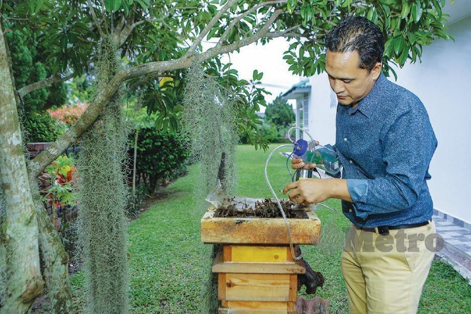 DR Nik Azlan melakukan proses mengeluarkan madu kelulut dari sarang.