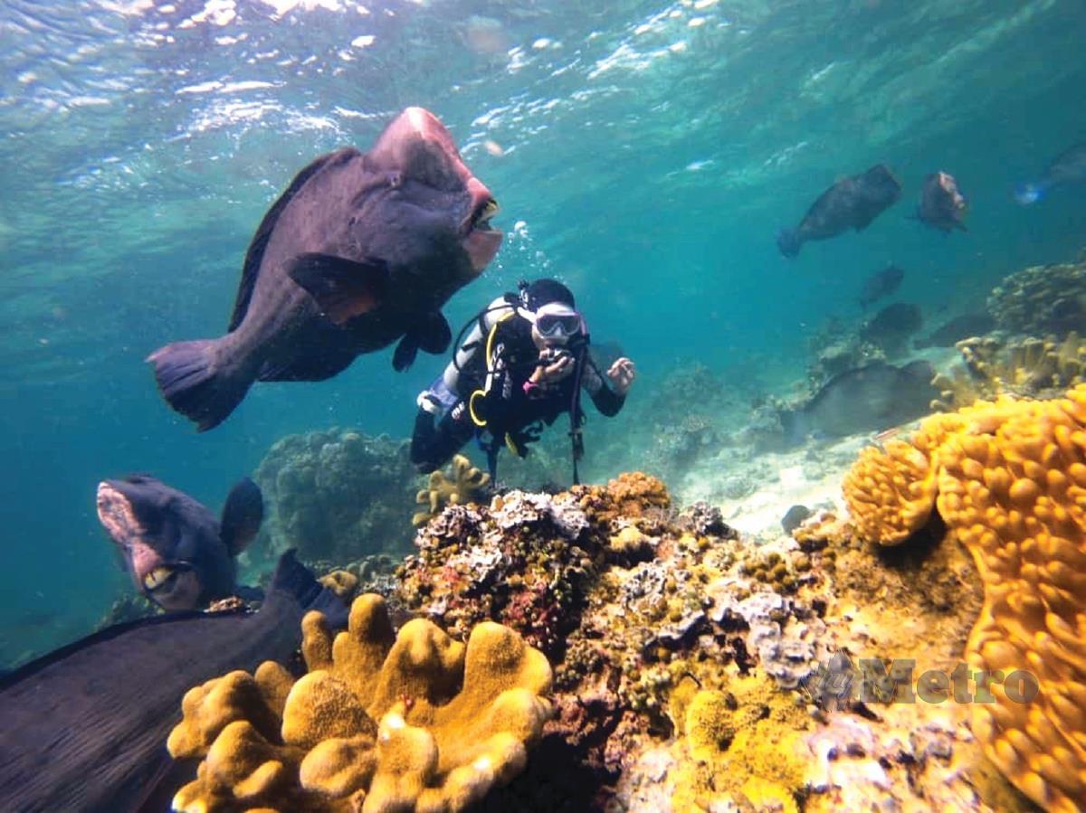 HIDUPAN marin yang pelbagai spesies dan warna.