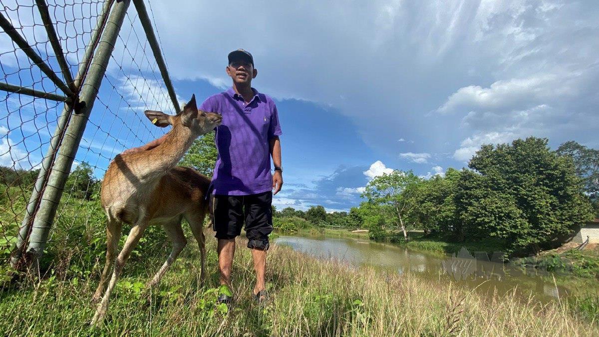 LENGGONG mempunyai ladang ternakan rusa yang boleh dikunjungi.