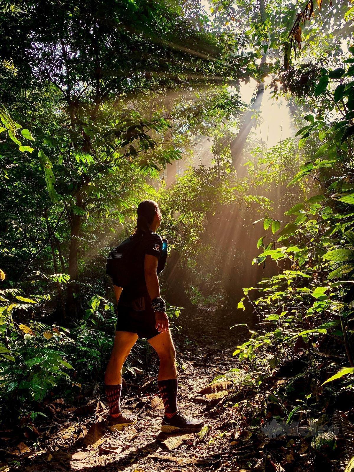 SINARAN matahari menembusi hutan amat mempesonakan.