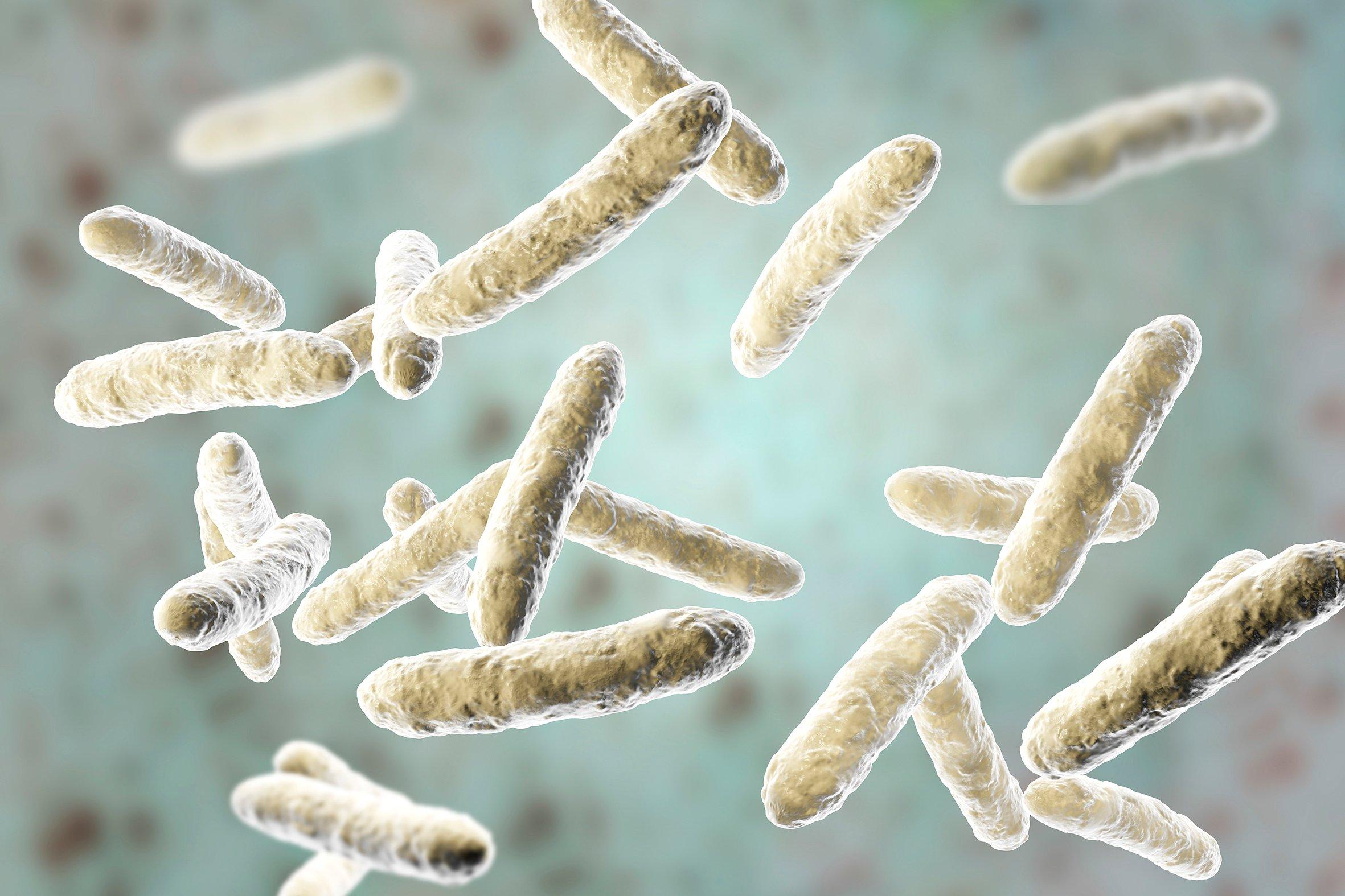 Bakteria baik membantu badan memerangi pelbagai penyakit. - FOTO VITAGEN Malaysia